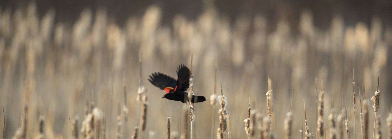 Bird flying through reeds